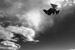 nosedive (sasazukabatta) Tags: sky nosedive kite bird bw cloud clouds