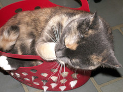 No Problem, I Can Fit in This Little Basket (Sister72) Tags: red proud comfortable cat furry basket kitty lick cleaning whiskers precious bite tightsqueeze msh0107 msh01071