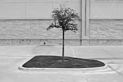 A Little Tree on a Concrete Island (Dean Terry) Tags: urban tree film concrete island design parkinglot alone texas sad suburban nowhere cement documentary urbannature isolation lonely suburb minimalism sprawl proportion pathetic isolated frisco urbanplanning suburbansprawl subdivision urbansprawl deanterry subdivided bigbox friscotexas photophilosophy urbannatureblog