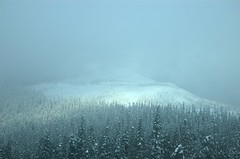 Fade into ..... (Mark Griffith) Tags: snoqualmiepass hyak snow winter snowshoeing trees forest wow
