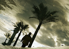 Reflection One (Délirante bestiole [la poésie des goupils]) Tags: lebanon man reflection topf25 water topv111 puddle seaside great 100v10f palmtrees reflet palmtree beirut beyrouth liban puddlepool 76points