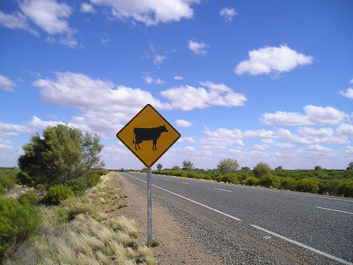 Beware of cows sign in Australia