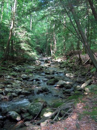 Appalachian Stream / eastern Tennessee