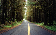 Road to Hoh Rain Forest (bentilden) Tags: road trees usa green olympicpeninsula washingtonstate hohrainforest