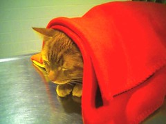 urinary infection cat