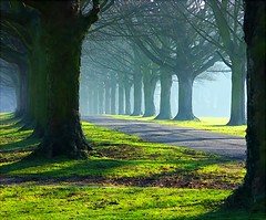 The Avenue trees in mists and sun (algo) Tags: uk blue winter light england brown green grass sunshine misty fog landscape photography interestin