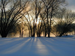 winter sunrise (gypsy harris) Tags: morning trees winter shadow sun mist snow newyork tree nature sunshine misty sunrise river landscape frozen scenery glare shadows dramatic chenango