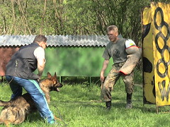 Training personal protection dog (Slovakia)