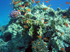 Coral Reef (Sam and Ian) Tags: sea fish water underwater snorkel redsea egypt sharmelsheikh snorkeling snorkelling sharm coralreef naamabay