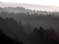 Layers (Linda6769) Tags: autumn winter mist black tree silhouette forest germany grey thringen woods village herbst january thuringia explore layer landschaft sonne baum autumnal sonnenstrahlen conifer thuringian nadelbaum hildburghausen herbstlich konifere explored nobw brden autumnallandscape landschaftimherbst herbstlichelandschaft