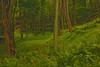 Tumbling Run (2bmolar) Tags: day165 tumblingrun hss day165365 sliderssunday 365the2015edition 14jun15 3652015
