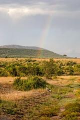 Rainbow over the Masai Mara, Kenya (CamelKW) Tags: rainbow kenya safari masaimara gamedrive nikon3100 2015 masimara