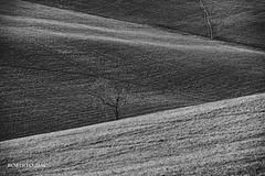 GIOCHI DI LINEE E LUCE!! (Roberto.mac.) Tags: bw landscapes natura ombre luci curve toscana livorno paesaggio orizzonti alberello giochidilinee robertomac fantasiadelbw
