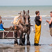 "2015_08_07_Paardenvissers_Oostduinkerke-85 • <a style=""font-size:0.8em;"" href=""http://www.flickr.com/photos/100070713@N08/20216092158/"" target=""_blank"">View on Flickr</a>"