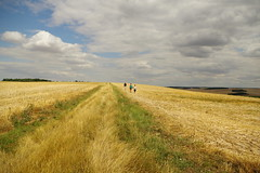 Arpenter la Terre 地球を歩く Walk the Earth (philch6) Tags: summer france landscape countryside pentax earth walk side country july charles land terre 夏 scape été paysage bourgogne campagne juillet ricoh philippe marche 風景 フランス k3 autofocus 2015 marcher 田舎 歩く 七月 yonne 地球 歩 ブルゴーニュ thebestofday gününeniyisi philch6 2015年 ヨンヌ県 ヨンヌ ブルゴーニュ地域圏