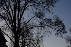 fall forenoon tree house (fdfotografie) Tags: herbst vormittag baum haus silhouette schattenriss scherenschnitt ausschnitt stamm äste verzweigungen selbstähnlichkeit muster struktur schwarz blau outdoor himmel morgenlicht dslr farbfoto querformat heiter ambivalent serie baumsilhouette d7100