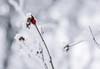 (bloodwithmilk) Tags: winter white life nature nikon d800 50mm red orange flower green tree snow chrismas garden flowers nikkor flickr bokeh