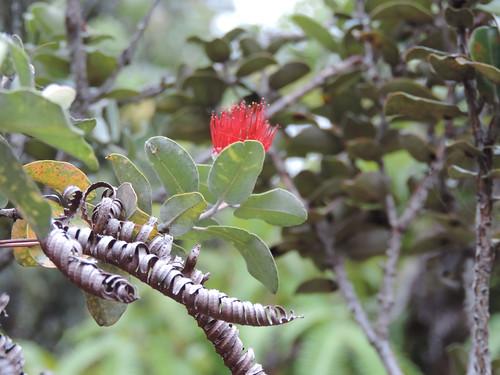 Le Parc National des Volcans d'Hawaii, Big Island, Hawaii (États-Unis)