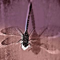 Sturzflug (losy) Tags: nosedive bug losyphotography pink nursery
