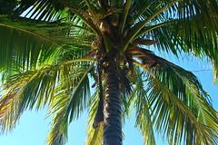 Key West (Florida) Trip 2016 0056Rif 4x6 (edgarandron - Busy!) Tags: florida keys floridakeys keywest higgsbeach
