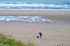 The Stray, Marske. (capstick13) Tags: dogandowner dogwalker marskebeach beach sand grassland