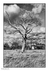 Dead Tree - Langley Park House (jerry_lake) Tags: bw contrast18 d90 define2 filomtypefujineopanacros100 langleyparkhouse nikon1755mmf28 silverefexpro2 structure31 brightness0