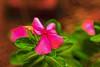 Art (Rajavelu1) Tags: flowers red green art artland creative canon60d sigma1835mmf18