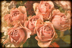 Say it with roses 12/365 (radleyfreak) Tags: roses pink textures words flowers boquet 365 days