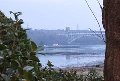 7202 Ynys Gored Goch, an island in the Menai Straits (Andy - Busyyyyyyyyy) Tags: 20170122 bbb bridge britanniabridge iii island menaistraits mmm pontbritannia ppp ynysgoredgoch yyy