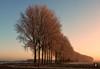 Treeeesss,...Rumpt(NL) (@FTW FoToWillem) Tags: landscape landschap holland hollanda holandes hollande gelderland betuwe rumpt tree trees zon zonsopkomst sun sunrise polder morning landschapsfotografie rijp frost winter nederland netherlands dutch nature natuur travel outdoor fotowillem willemvernooy ftw morgenstond ngc