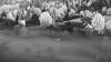 sunrise (schneider-lein) Tags: sitzberg schweiz switzerland swiss suisse svizzzera blackwhite black white fog nebel misty hazy smokey schwarz weiss monotone mono monochrome landscape landschaft natur nature mf manual manualfocus manuell manuellerfokus minolta minoltamd2004 sonyilce7rmii alpha7rmii a7rii sunrise frosty frozen sonnenaufgang baum tree forrest wald kirche church old alt oldhouse alteshaus farm bauernhof