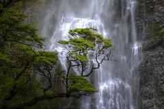 The Waterfall (Wunderbowl) Tags: nature natura arthurspass newzealand waterfall cascata hdr devilspunchbowlwaterfall devilspunchbowl