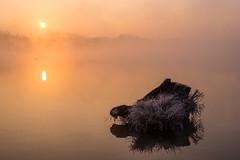 Sunrise at the lake (Che Camera) Tags: burkheim dunst gegenlicht ilce7 kaiserstuhl lake landscape landschaft nebel rhein rheinaue rhinefloodplain see sonnenaufgang sonyalpha7 sunrise teamsony vogtsburg wasser backlight fog mist rhineriver water vogtsburgimkaiserstuhl badenwürttemberg deutschland de