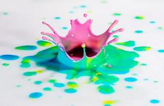 Pink Geyser (Brandon_Hilder) Tags: inksplash milkdrops studio highspeed stopmotion freezeframe macro micro closeup microworld macroworld small mini ink splash inksplashcolor colorful nikon 105mm nikon105mmmacro nikon105 nikon105mm d810 nikond810