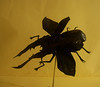 Cyclommatus Metallifer (Marcos Origami) Tags: bugs origami beetle
