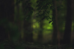 23/52 | Darkness (Tammy Schild) Tags: trees light green nature leaves forest dark evening woods glow branches m4h project52