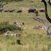 Zebras and elephants at Serengeti National Park - © 2015 Jean-François Schmitz