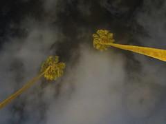 IMG_0788 (BadBunnny) Tags: nature naturaleza wild salvaje flowers flores flor flower cactus fire fuego circus circo malabares juggling mountain montañas snow nieve sky cielo