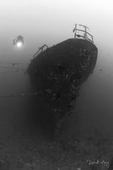 Boga (Randi Ang) Tags: bogawreck wreckdive shipwreck boga wreck ship kubu bali indonesia underwater scuba diving dive photography wide angle randi ang canon eos 6d fisheye 15mm randiang monochrome