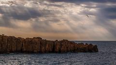 Solo (Karol, Read my Profile Please!) Tags: seascape clouds stormyweather light rocks clif bird burst