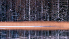 Winter straw by the lake (Tommy Høyland) Tags: landscape winter reflection outdoor straw early cold morning vista fujifilmxt2 forest fuji water nobody trees frozen ice earlymorning