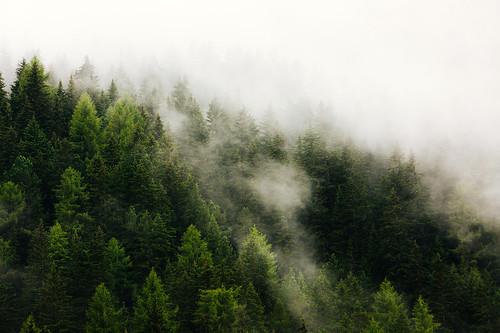 Val Pusteria – Green Trees Blue Fog