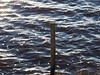Achtung Meer (extrazeit) Tags: zaun