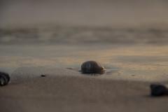 Winter beach (Infomastern) Tags: smygehamn coast hav kust sea östersjön