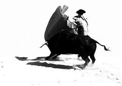 Manoletina de capote (aficion2012) Tags: arles novillada septembre 2016 blohorn jalabert corrida france francia andy younes novillero faena toros bull fight bullfight toreaux monochrome bw nb bn monotone capa capote capeando manoletina