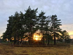 Woolmer Sunset (Marc Sayce) Tags: woolmer ranges forest conford whitehill longmoor south downs national park hampshire sunset sundown through the trees