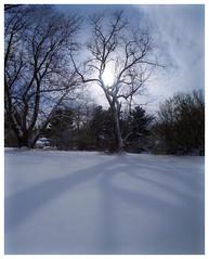 Snow Day (daveelmore) Tags: backyard yard snow trees winter sunlight cold stitchedpanorama mzuiko918mm landscape