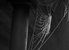 spider's web (stijn2525) Tags: canon 600d rebel cold winter nature ice limburg frozen bevroren blackandwhite spider web