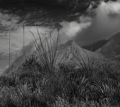 Desert Exploration (Barb McCourt) Tags: mountains clouds cloudporn elpaso epphotography exploringelpaso franklinmountains franklinmountainsstatepark desertsouthwest desertlandscape desertexploration desertvegetation desertphotography blackandwhitephotography blackandwhite bnw bw nikond7200 nikon