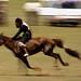 Horse racing in the Gobi